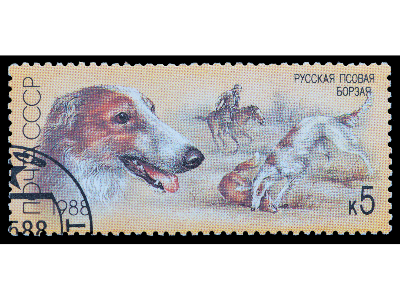 Borzoi Kills Wolf as shown on Borzoi Russian Postage Stamp from1988